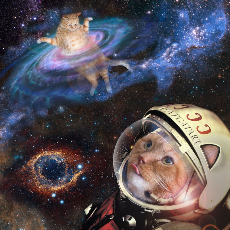 kots d kosmose